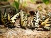 butterfly-03